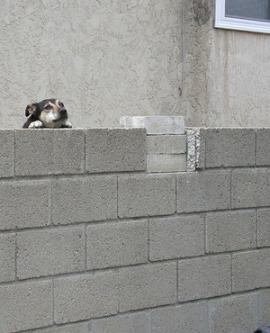 huilende-hond.jpg