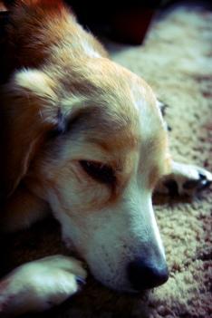 old_dog.jpg