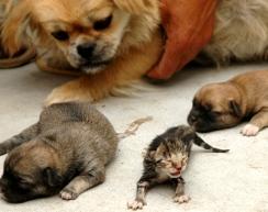 chinese_dogcat.jpg
