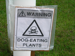 Dog-eating plants