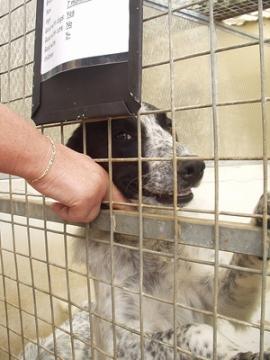 adopteer_een_hond.jpg